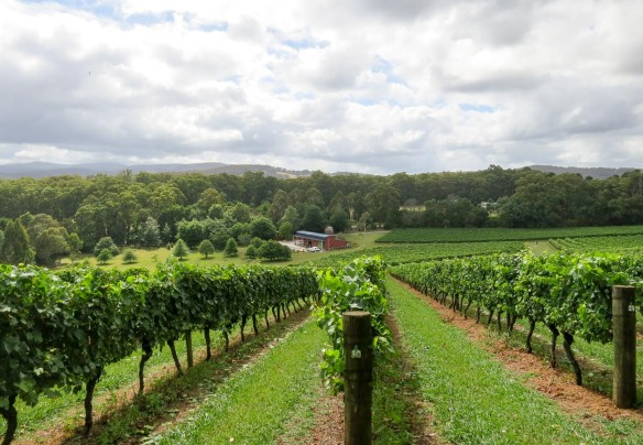 Gembrook Hill Vineyard and Winery. Photo by Michael Sperling.