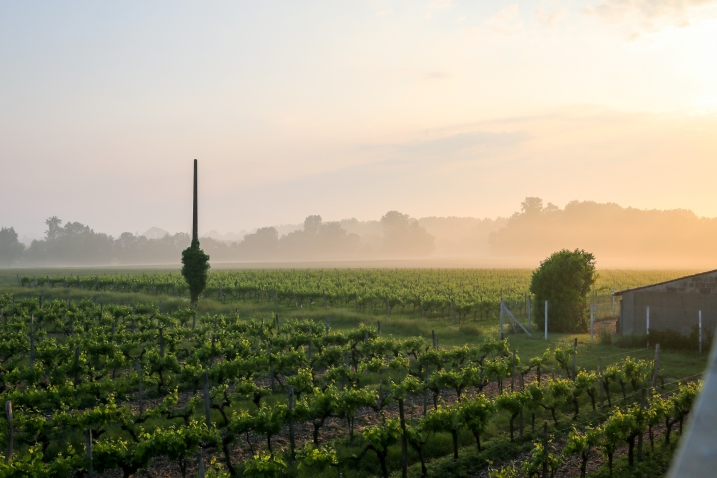 Cognac, Frankrig. Photo by Michael Sperling.