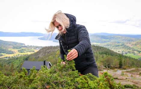 Lina Oscarsson plukker enebær på toppen af Skuleberget. Photo by Michael Sperling.