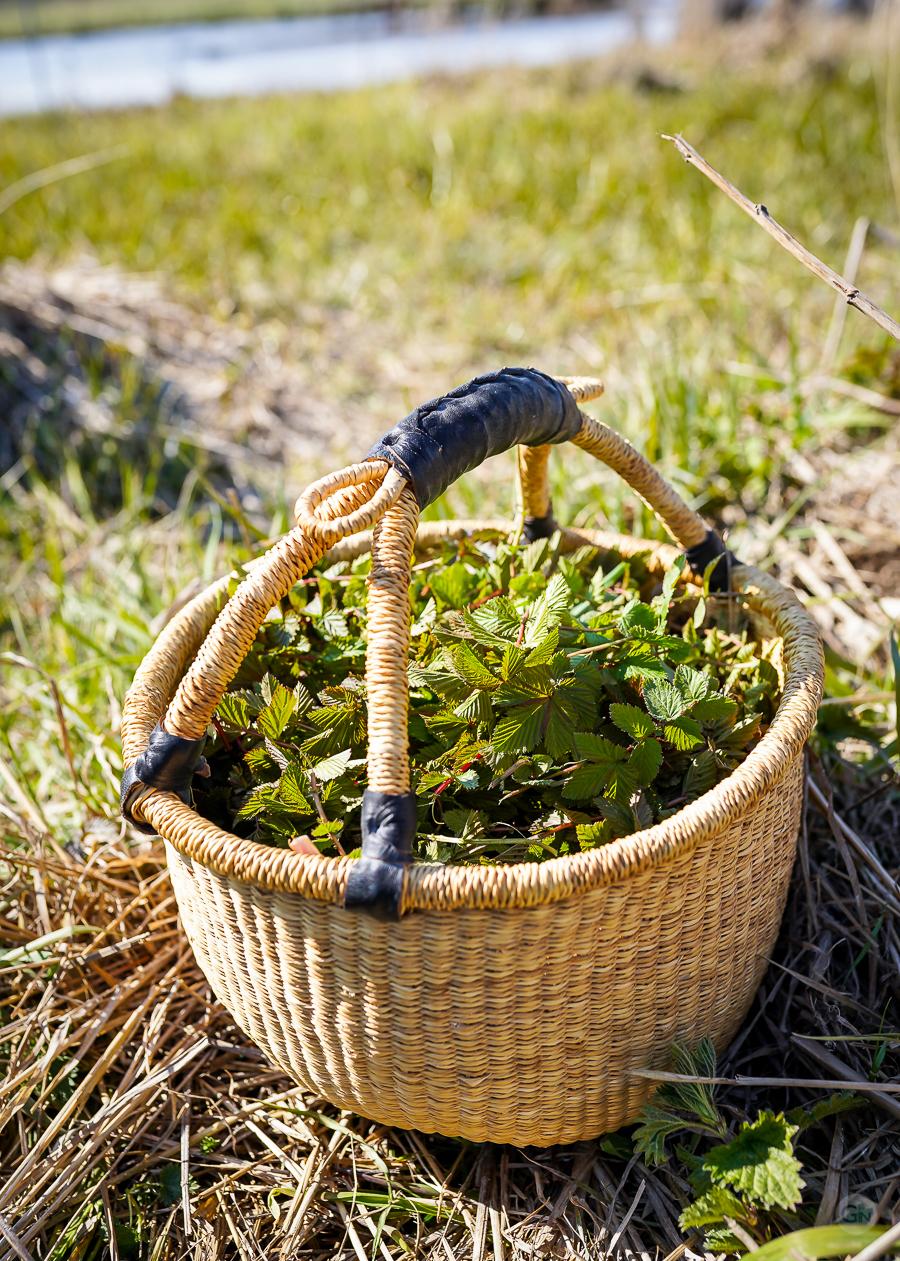 Dagens høst af mjødurt. Photo by Michael Sperling.