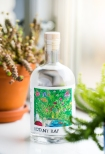 Botany Bay Gin by Hernö Gin x Four Pillars Gin. Photo by Michael Sperling.